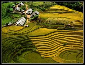 Vietnam in Depth 21 Days